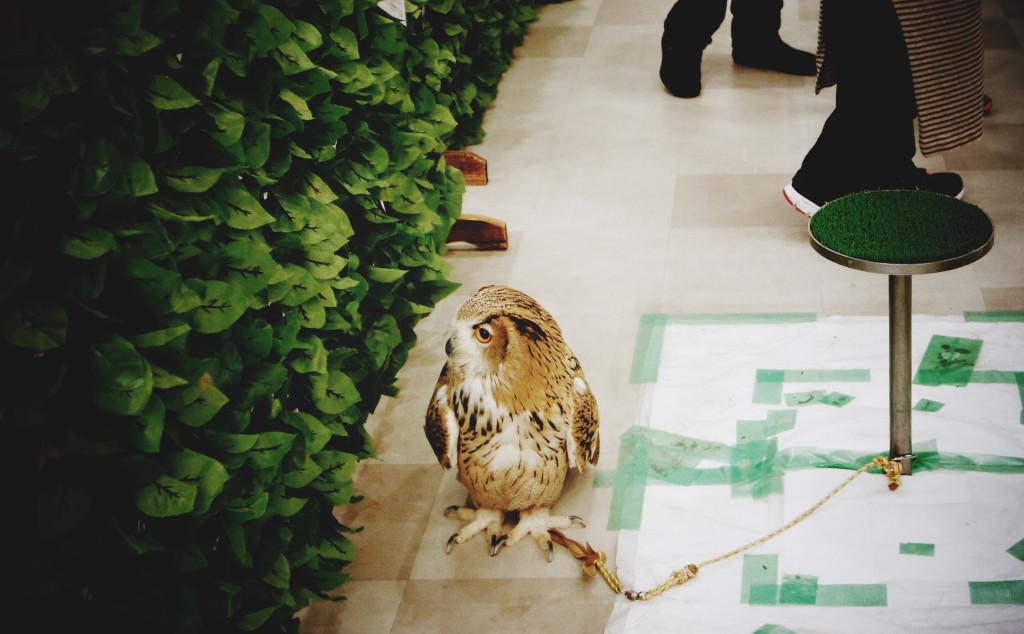 owl cafe, Osaka, Japan